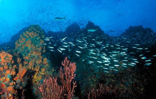 los-roques-diving.jpg
