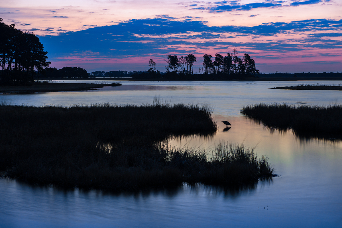 This image represents a deeper concept. Instead of simply capturing a sunrise, I included this Great Blue Heron and zoomed in capturing an image that tells a story of life on the marsh.
