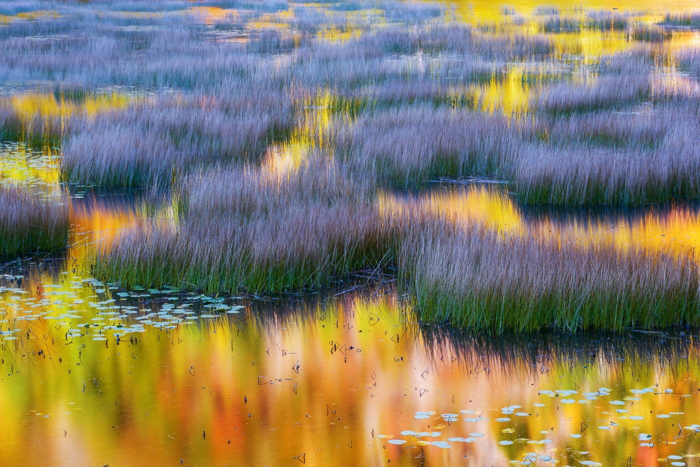 Reflections in the tarn, Acadia, Maine