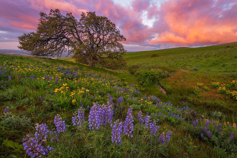 Columbia Hills, Oregon