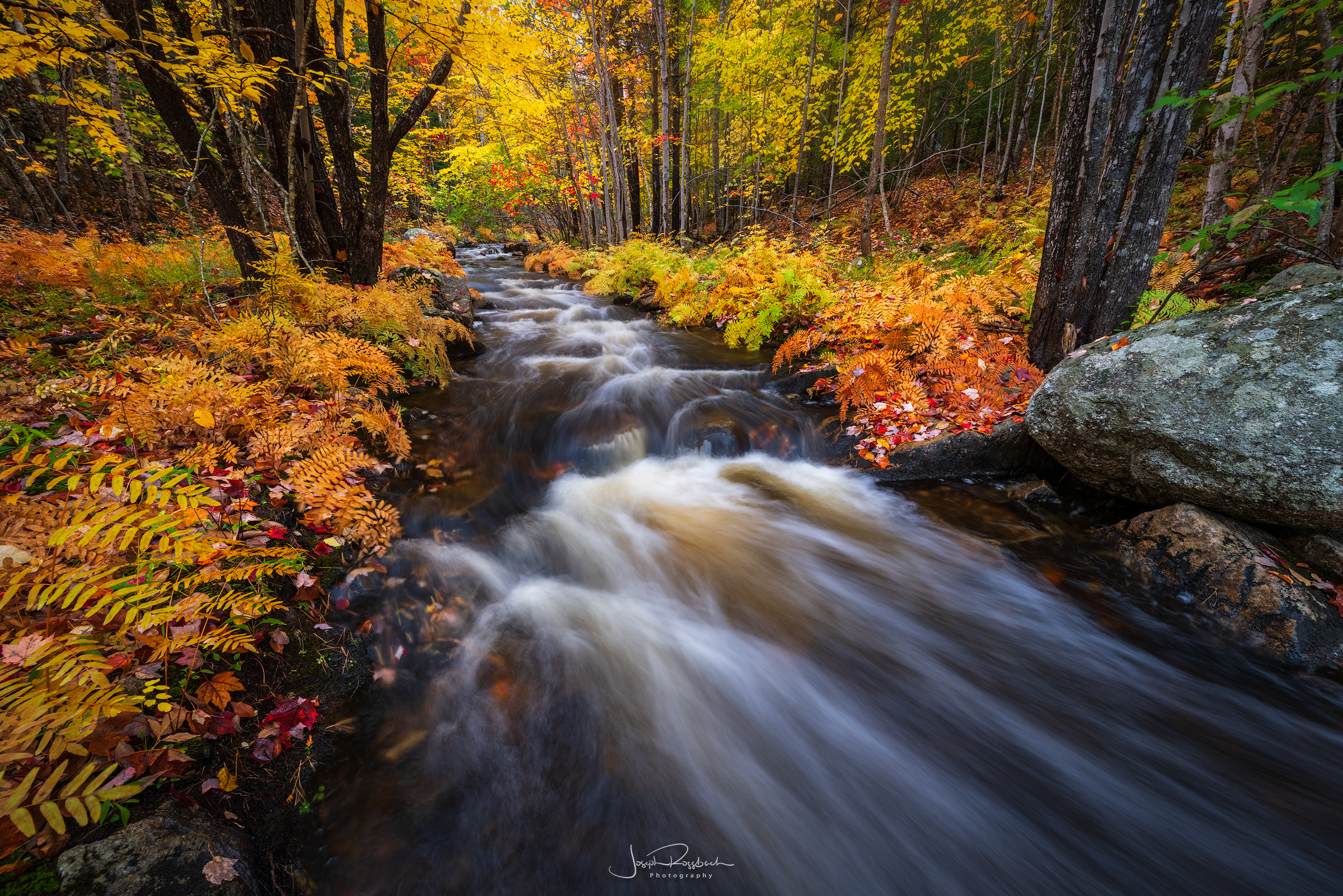 October Rush, Acadia National Park  Nikon D850, 14-24mm, NISI CPL