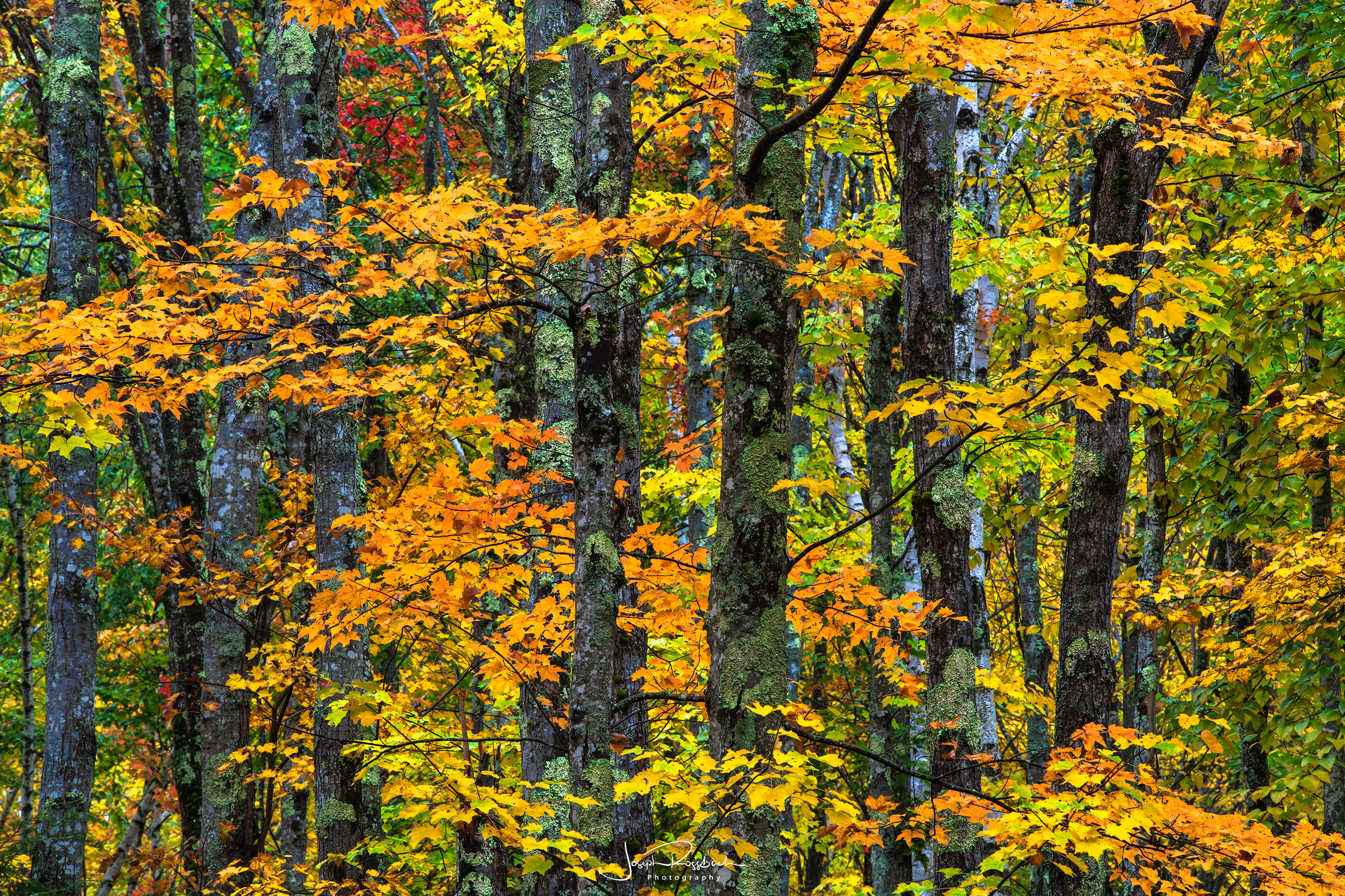 Autumn Mosaic, Acadia National Park, Maine  Nikon D850, Tokina 70-200mm, Singh Ray CPL
