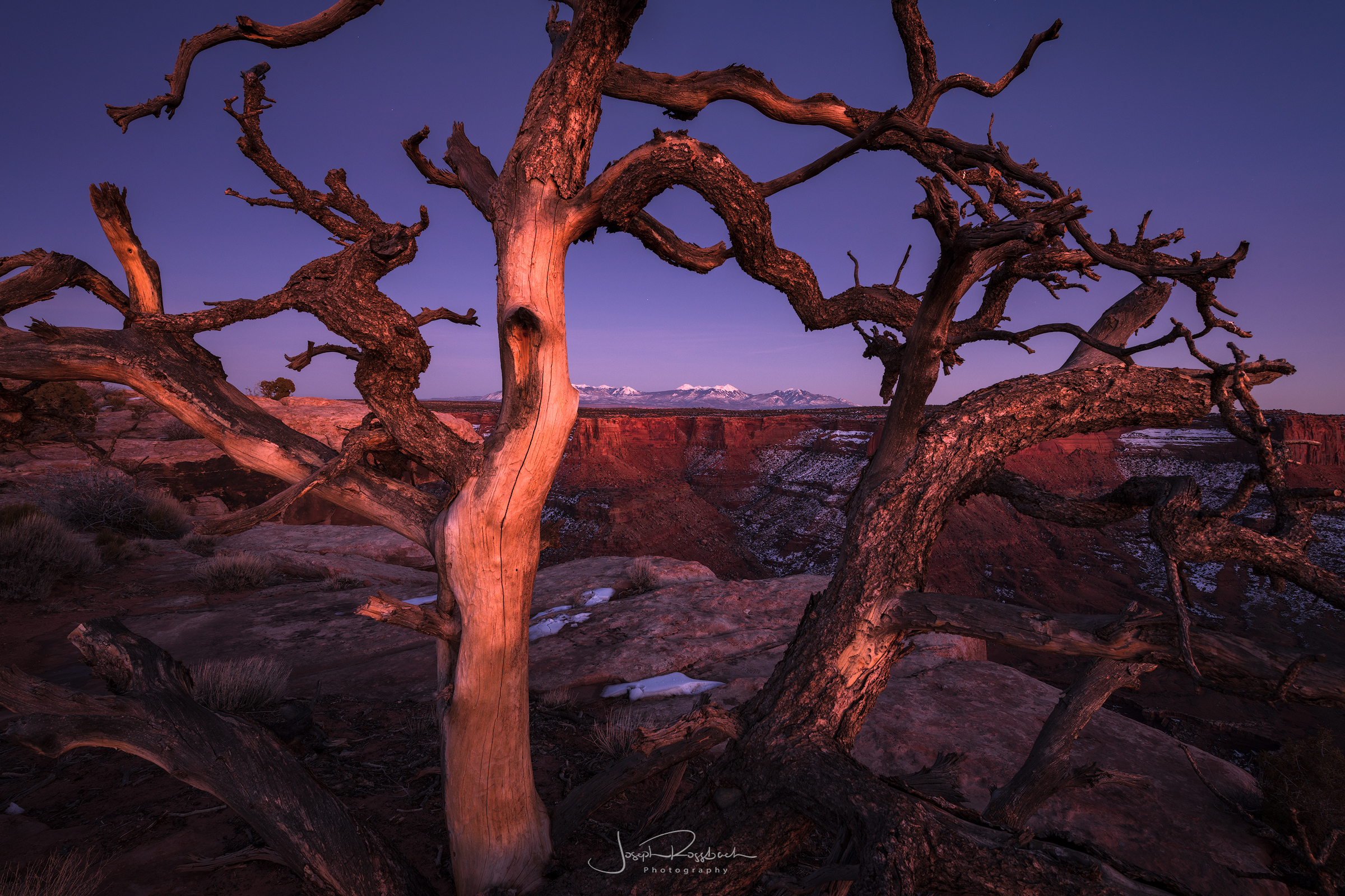 Watcher on the Rim, Canyonlands, Utah