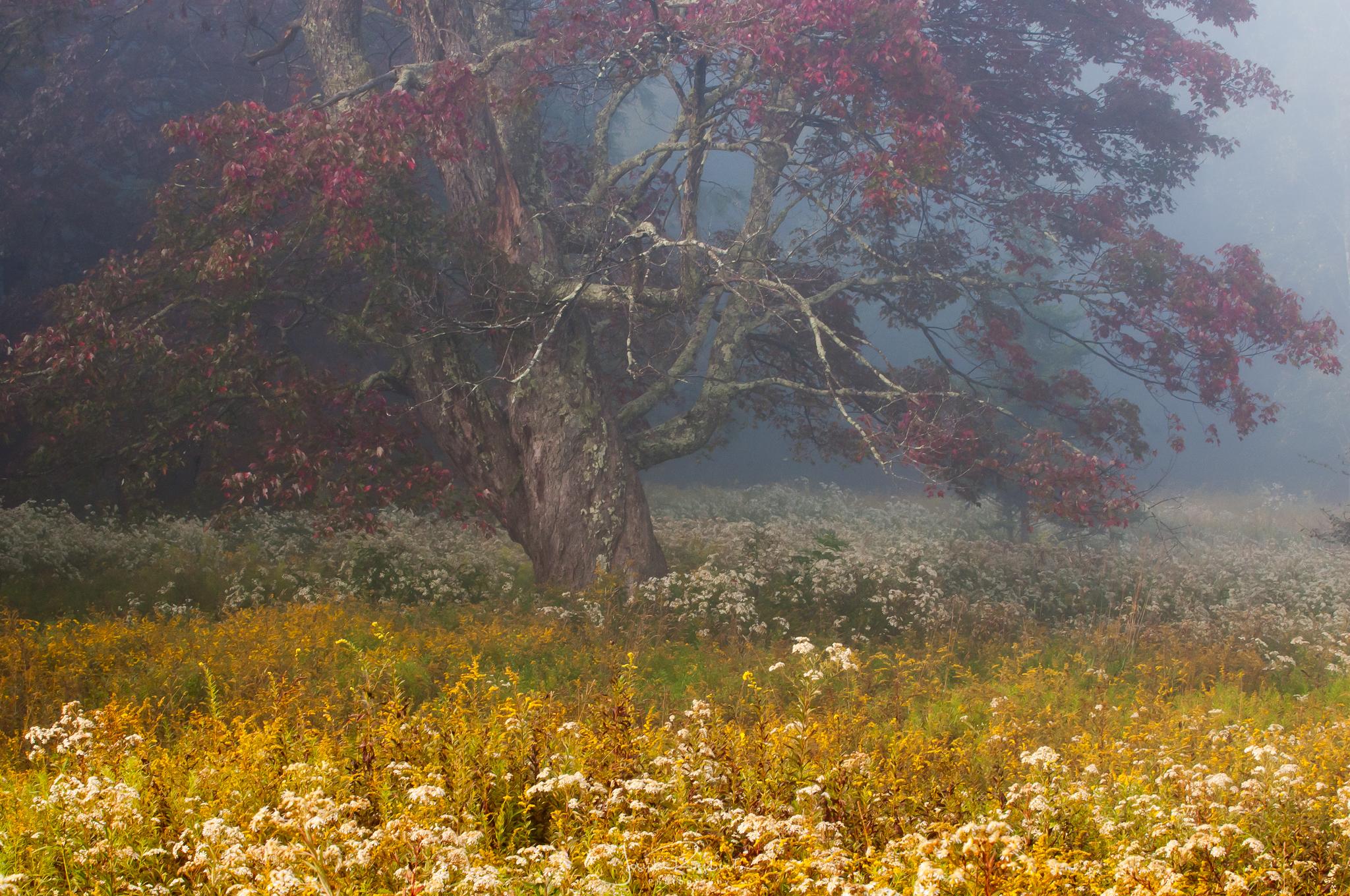 Misty Morning Meadow.jpg