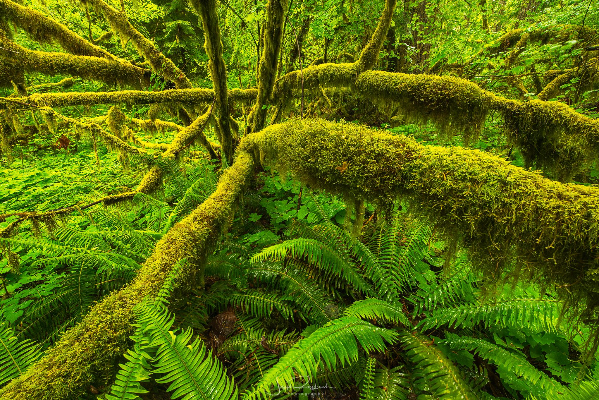Parched Sample Image-34.jpg