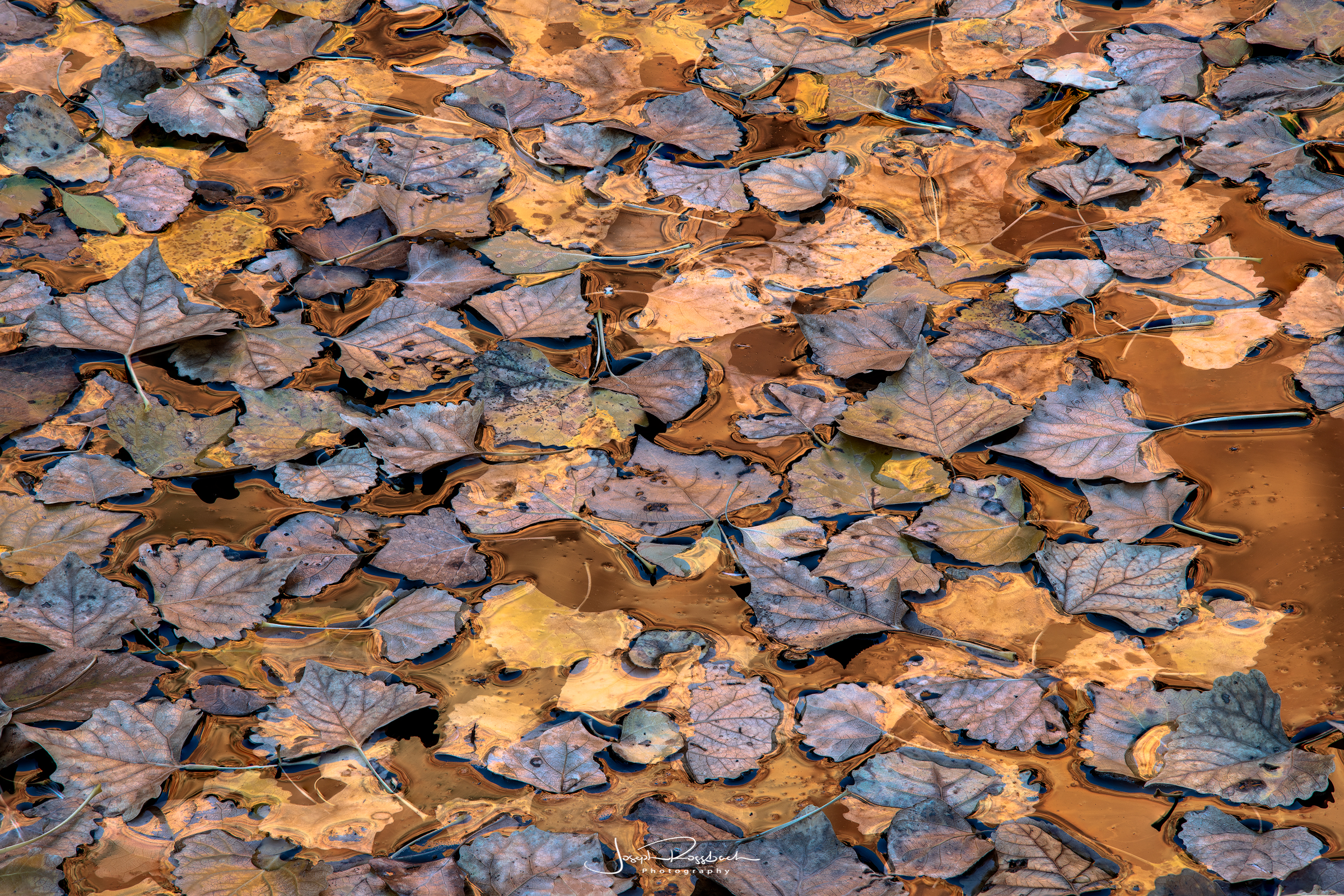 cottonwood-leaves-reflections-zion-utah.jpg