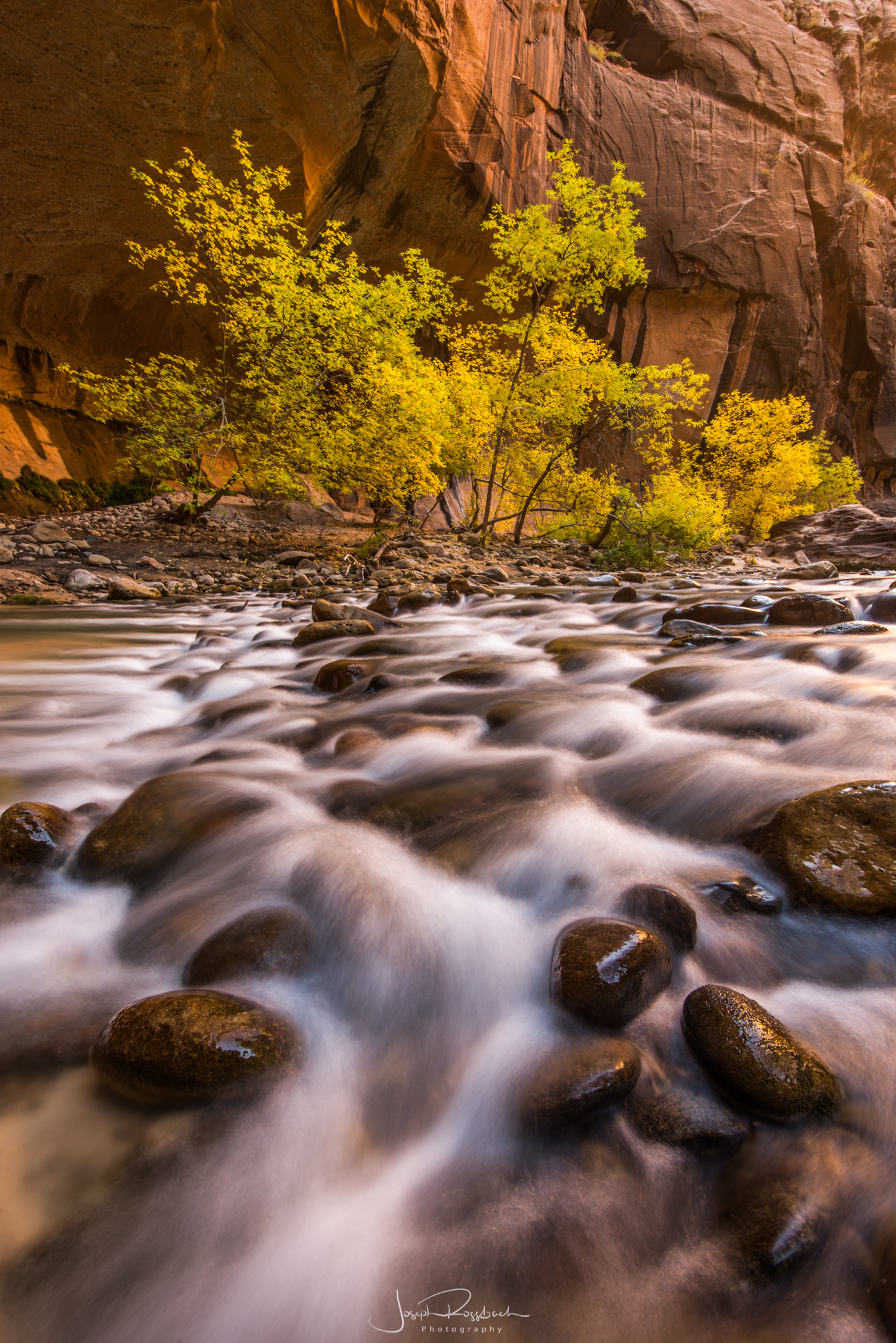 autumn-cottonwoods-zion-narrows.jpg