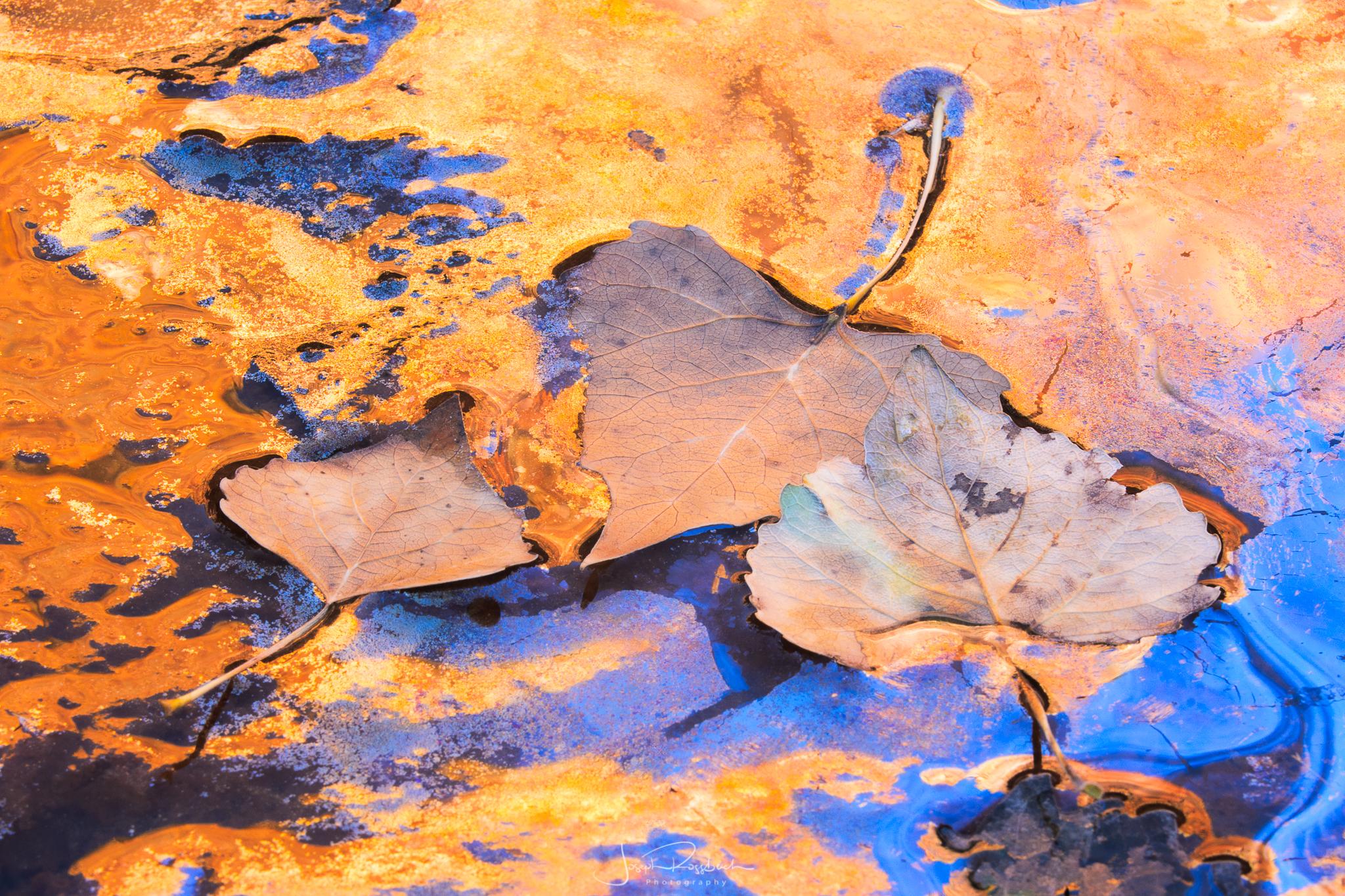 Parched Sample Image-30.jpg
