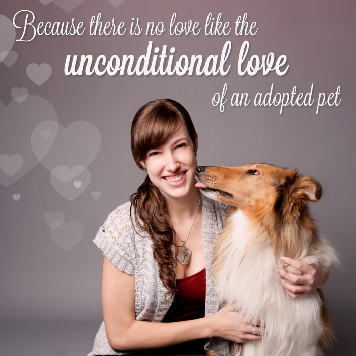 Ontario SPCA iAdopt Campaign