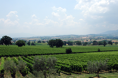 Perticaia-vineyards-web.jpg