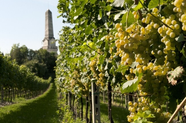 custoza-grape-varieties.jpg