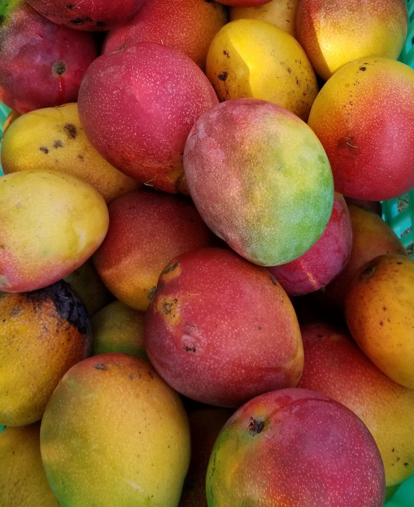 JuliAnne Royes Mango Parfait
