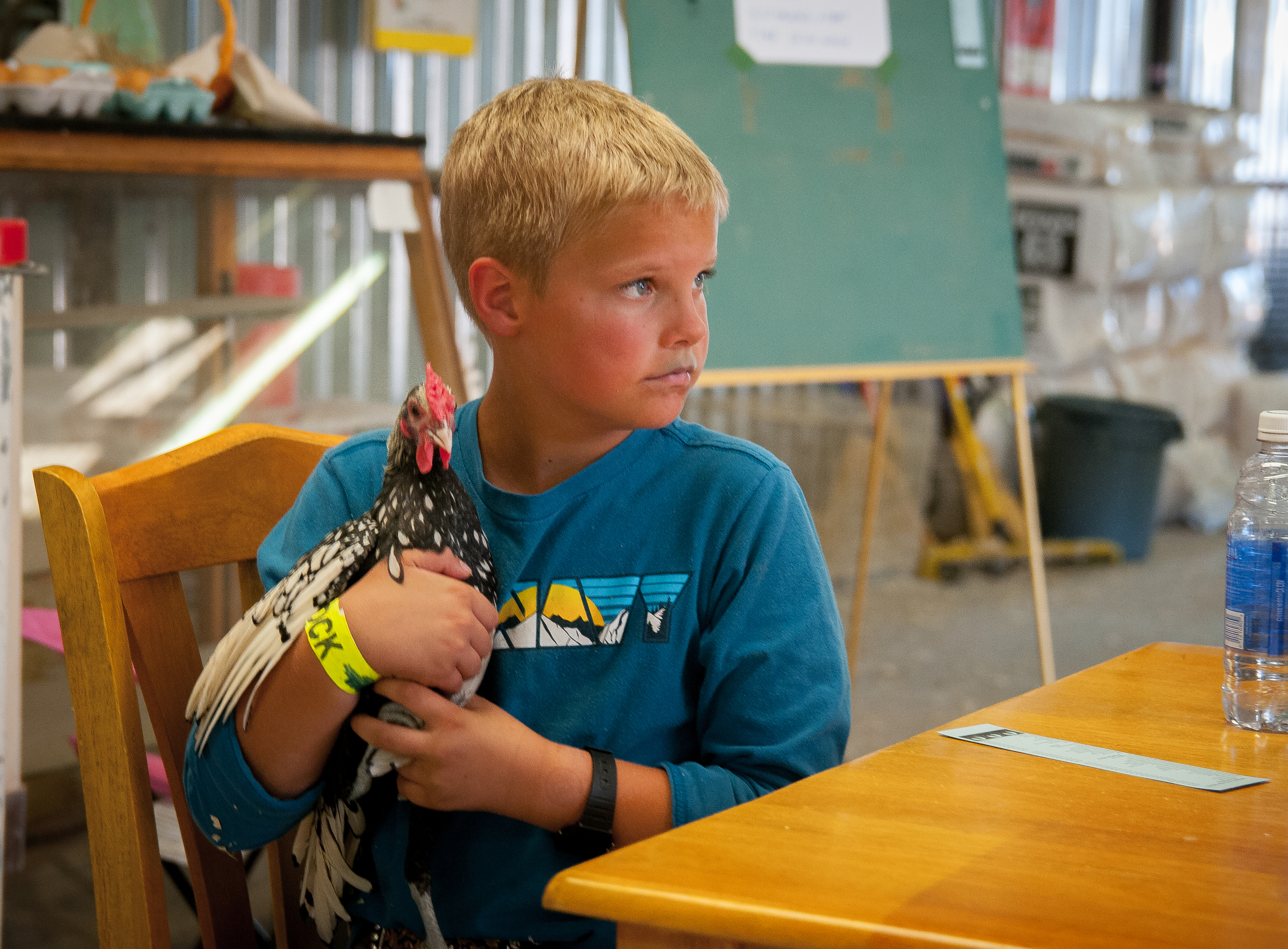 8-year-old Leland Sammons holds a rooster in the poultry pavilion at the 2015 Southern New Mexico State Fair & Rodeo.