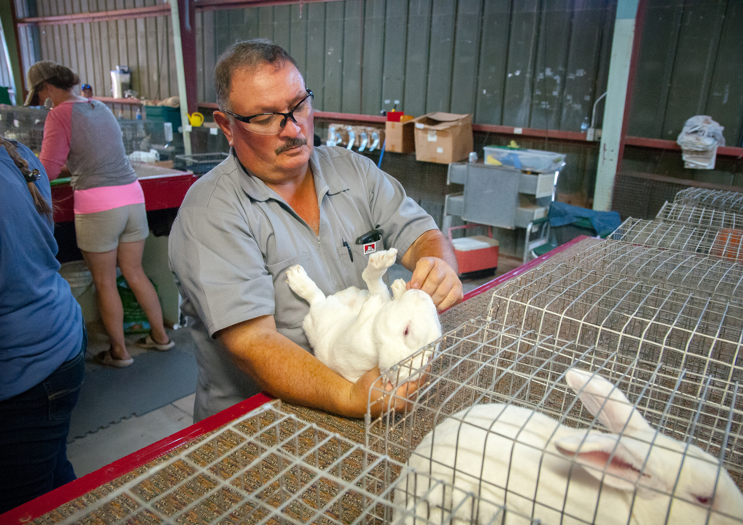 Southern New Mexico State Fair & Rodeo rabbit competition judge Mark Trujillo examines a rabbit on Wednesday. According to Trujillo the three main things he looks for in a rabbit are the quality of its flesh, disposition and fur, with fur being the most important.