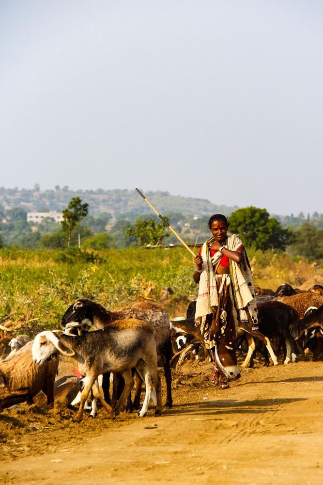 india-9936.jpg