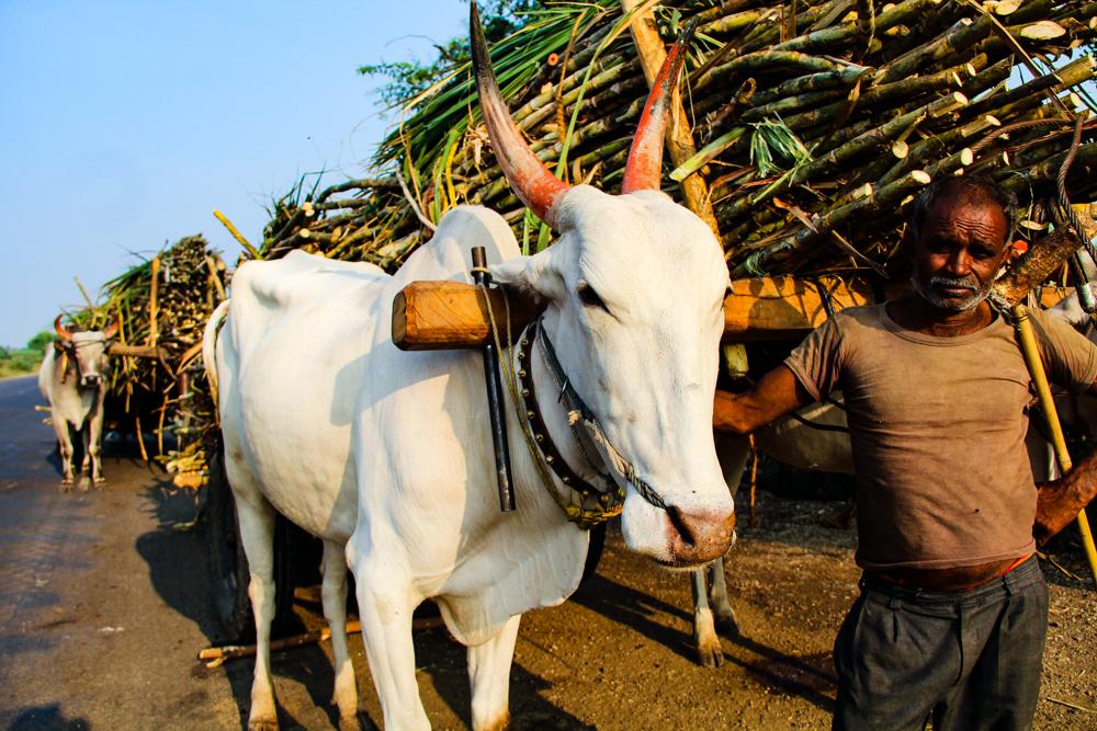 india-0206.jpg