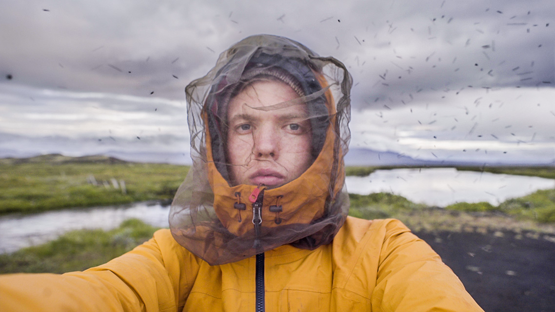 Midges around Mývatn are no joke.