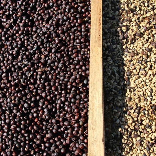 dry-coffee-fazenda-paraiso.jpg