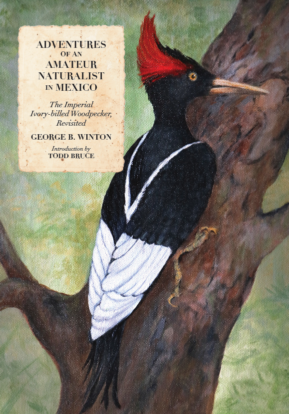ADVENTURES OF AN AMATEUR NATURALIST IN MEXICO: THE IMPERIAL IVORY-BILL WOODPECKER, REVISITED