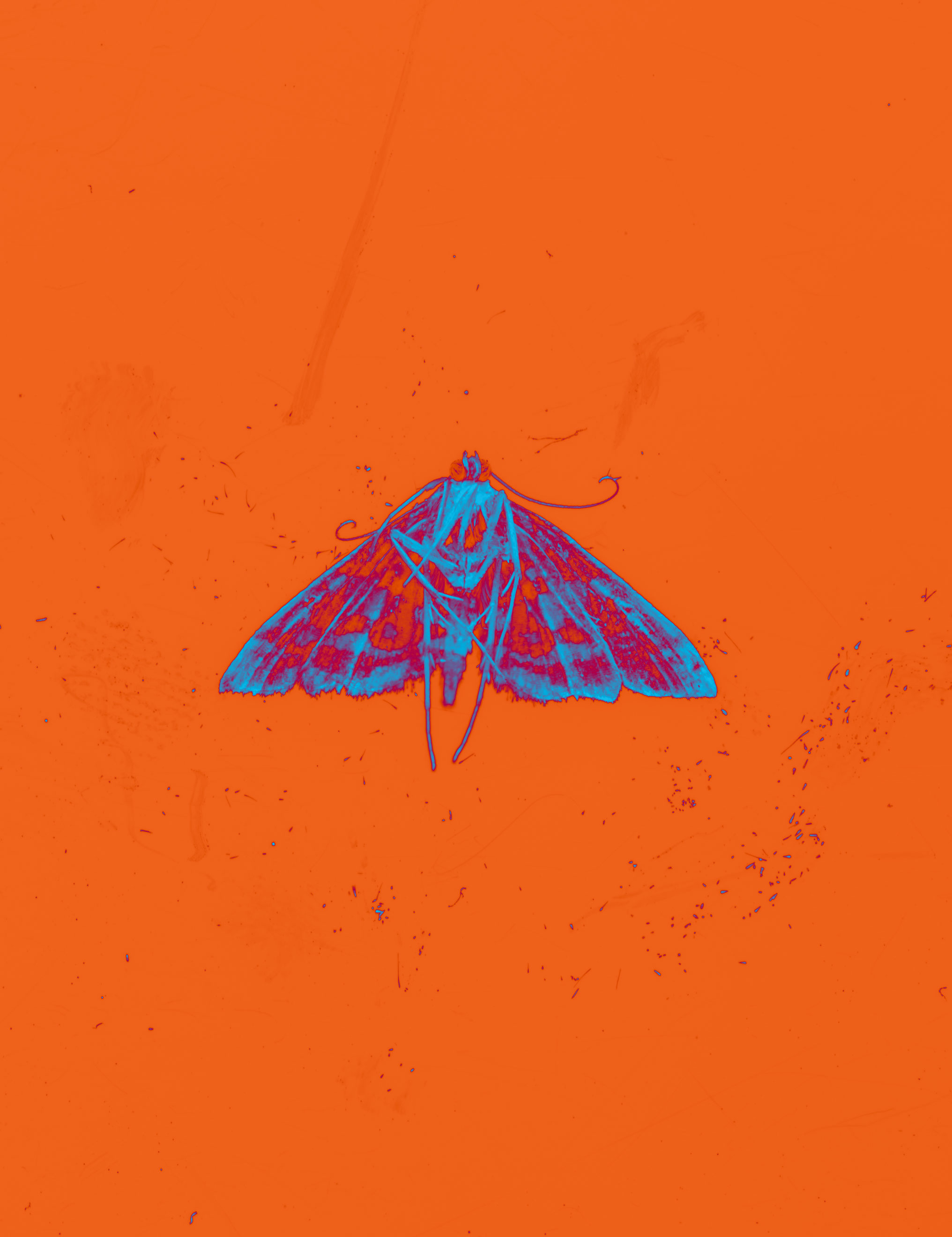 moth023.jpg