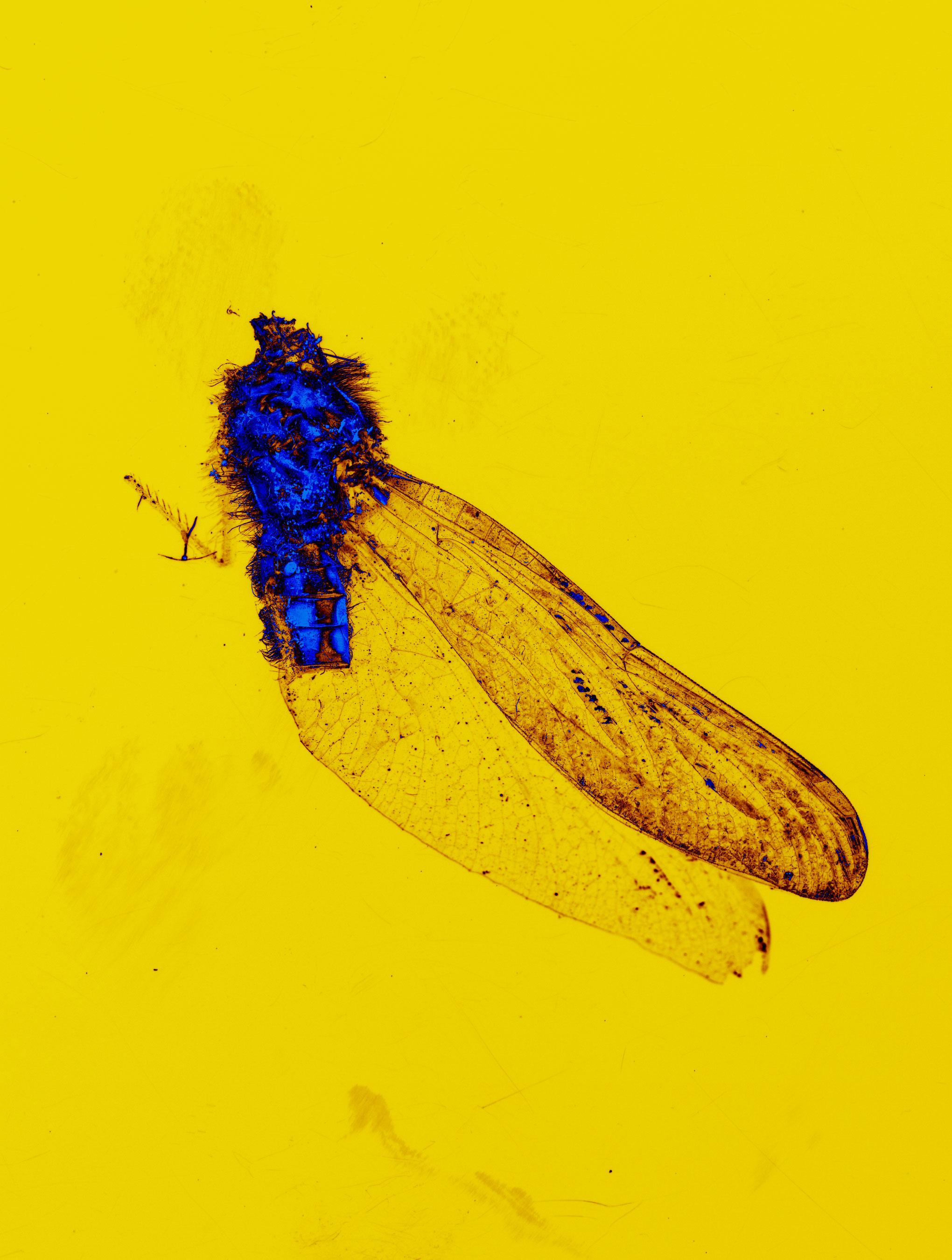 Moth011.jpg