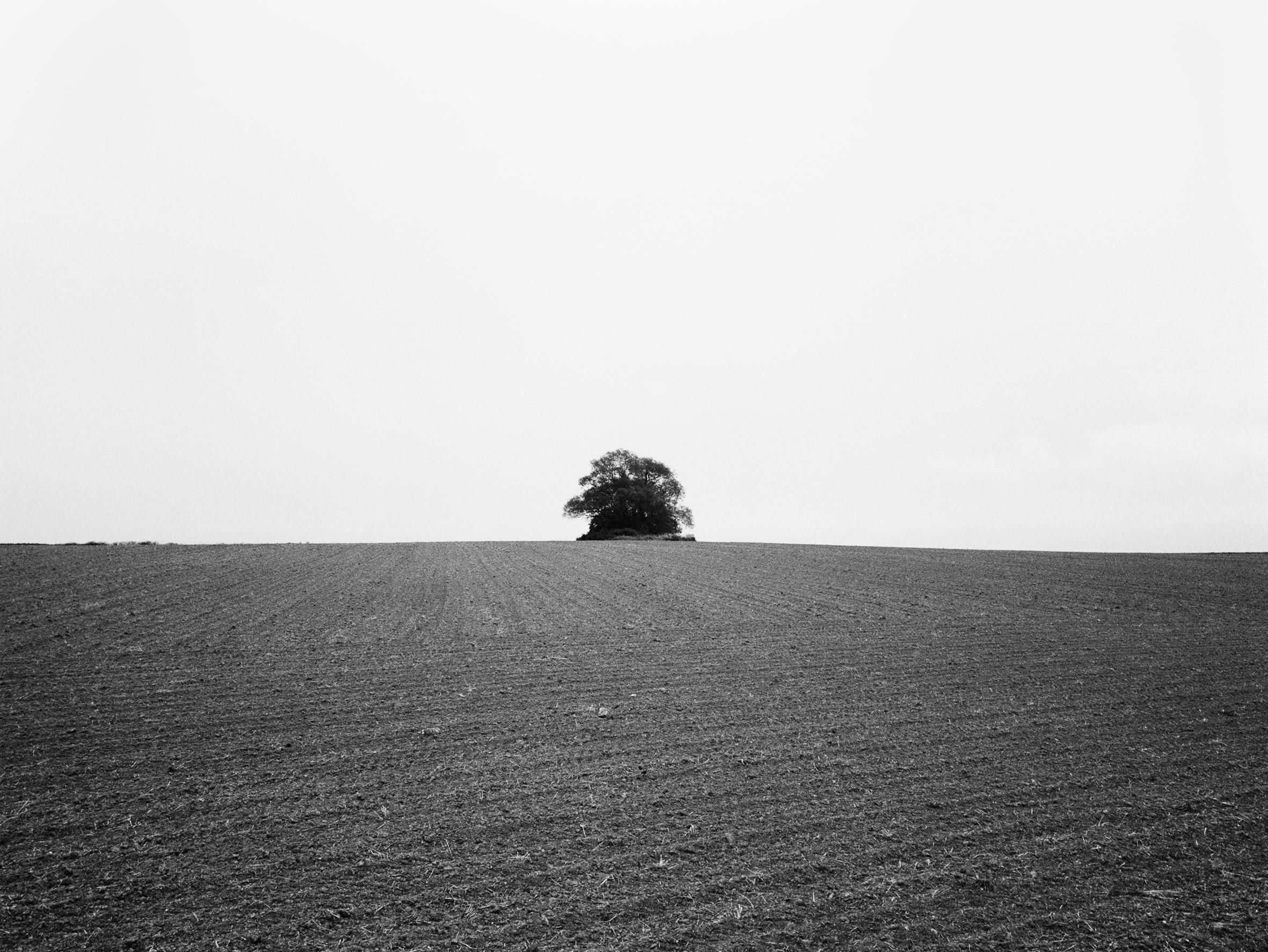 Czech_Lone_Tree.jpg