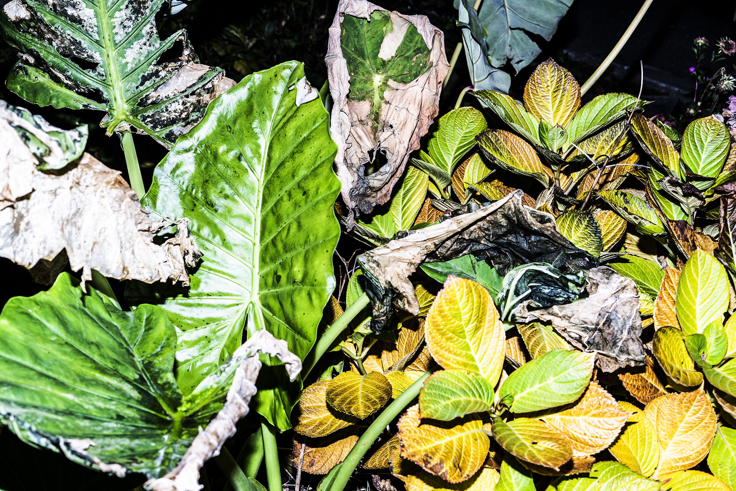 DEAD_PLANT.jpg