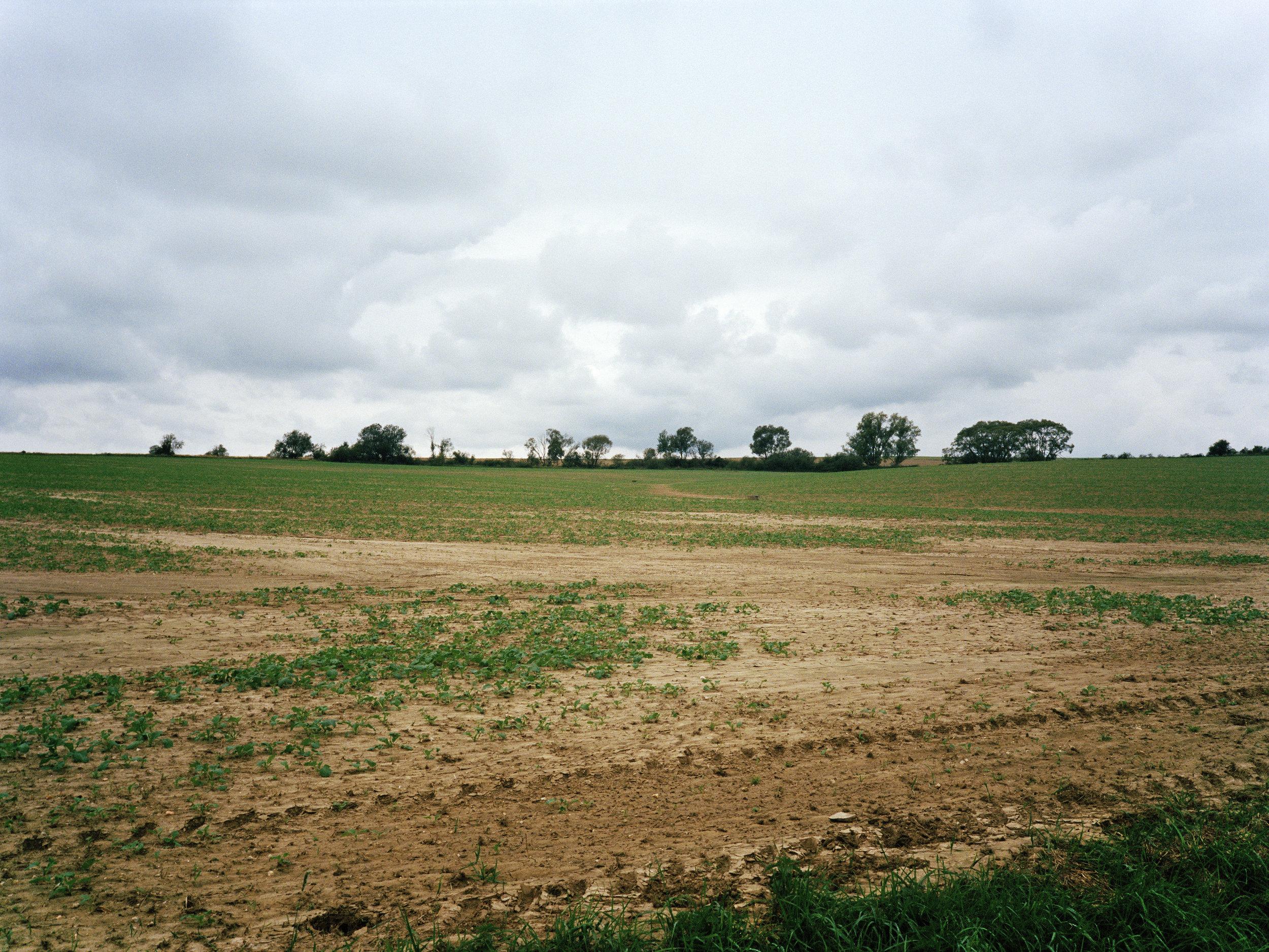 Czech Overcast Field.jpg
