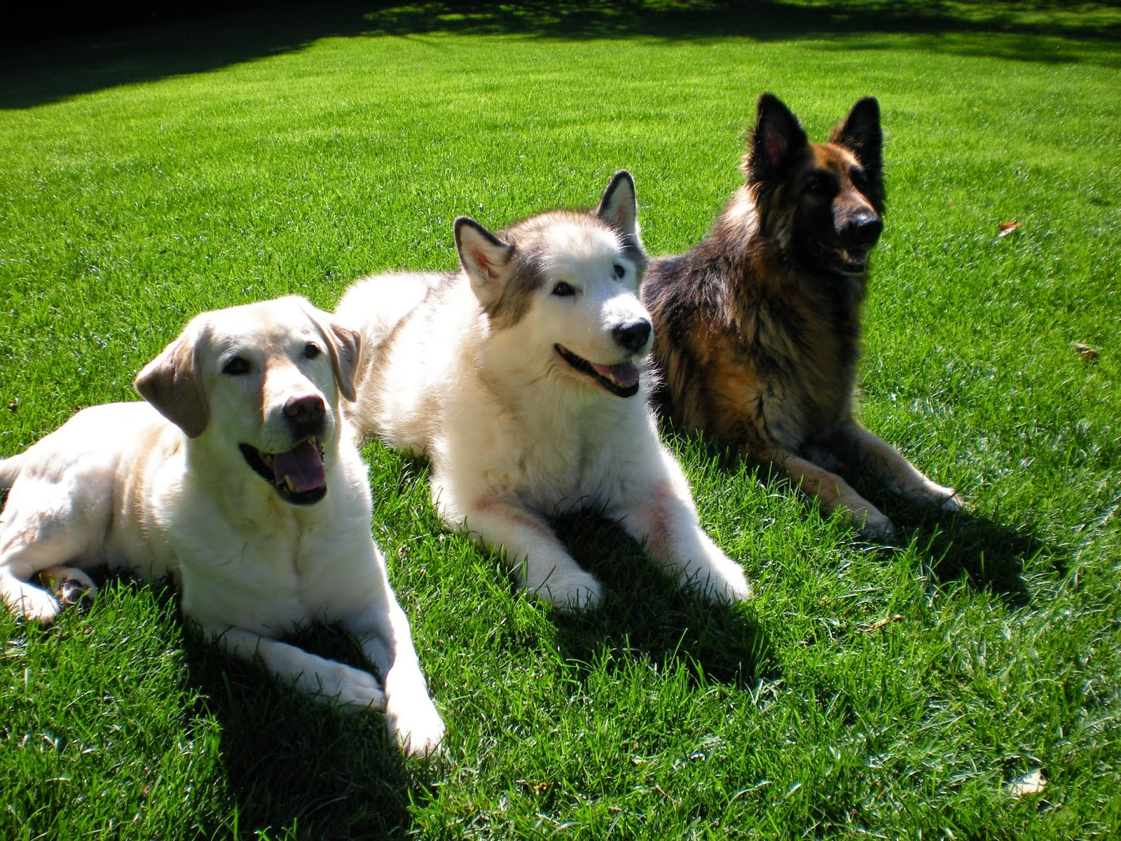 Buster, Casper and Kylie