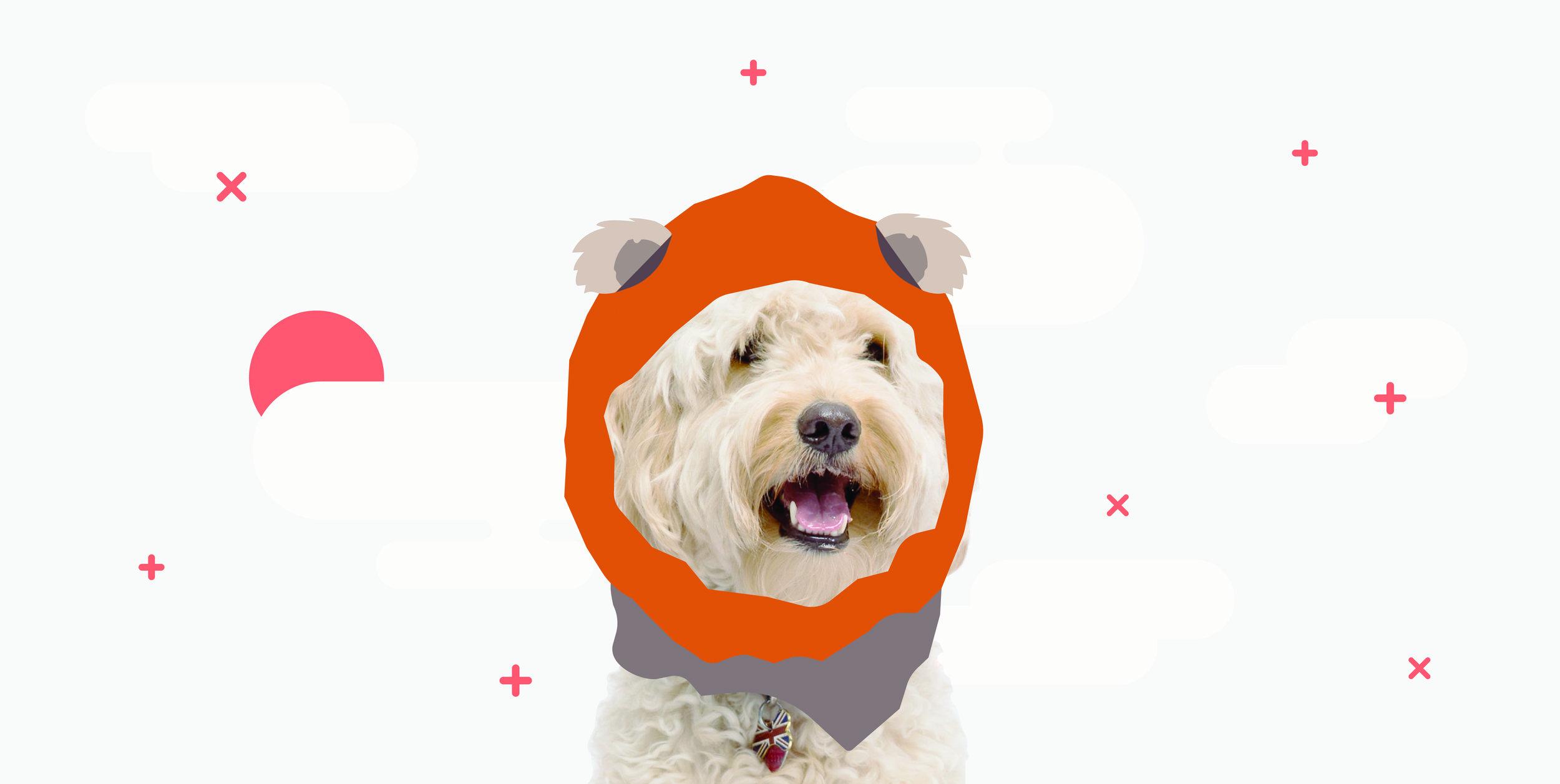 Illustration-waggo-modern-pet-brand-design.jpg
