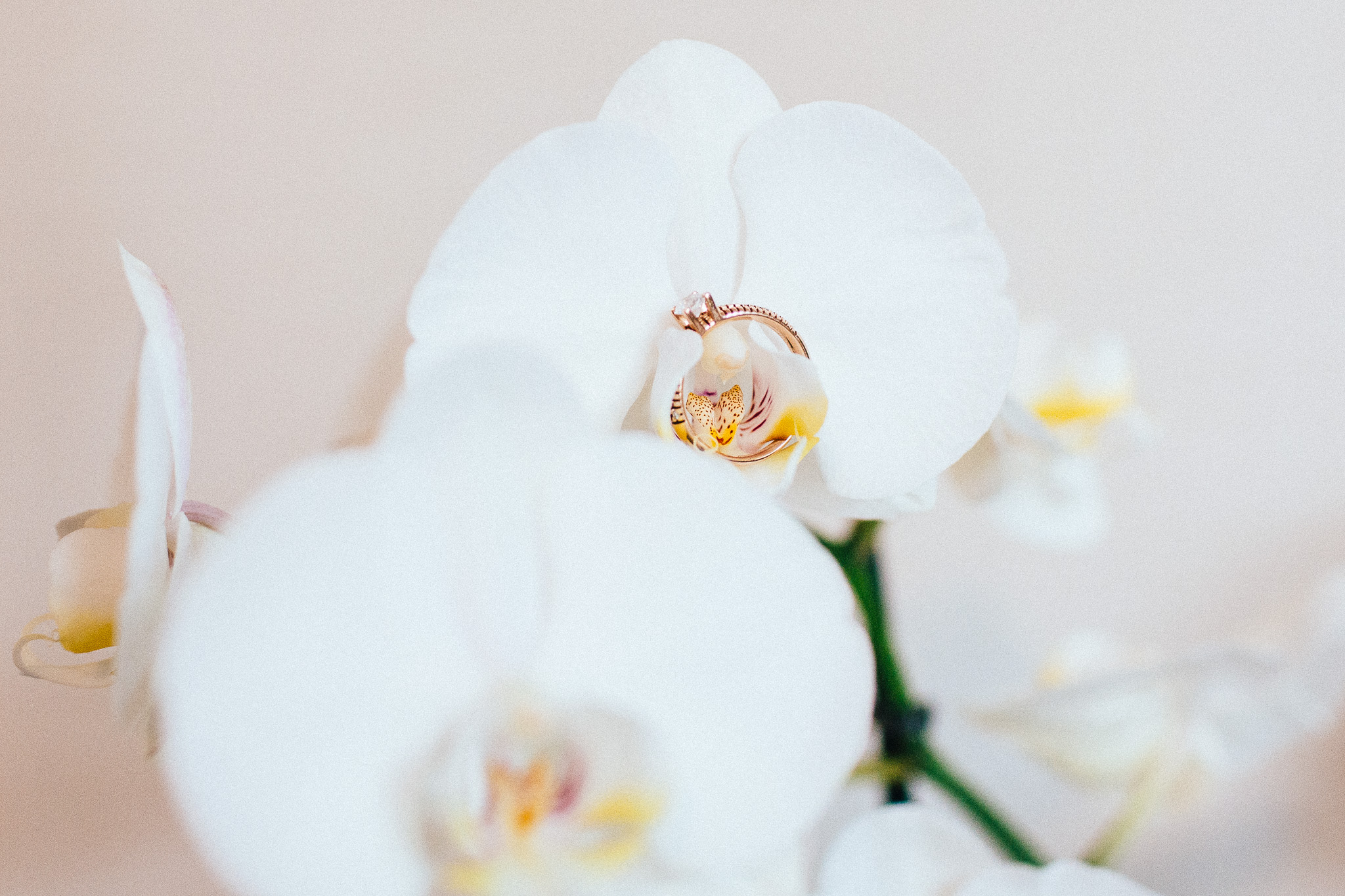 orchid ring detail photograph