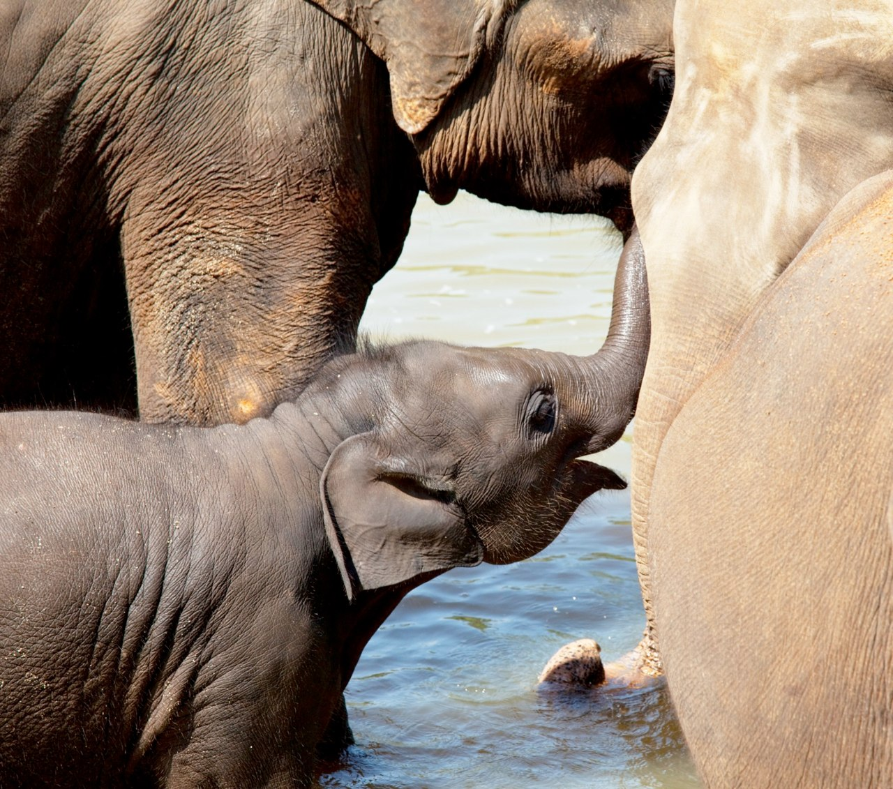 elephants (10).jpg