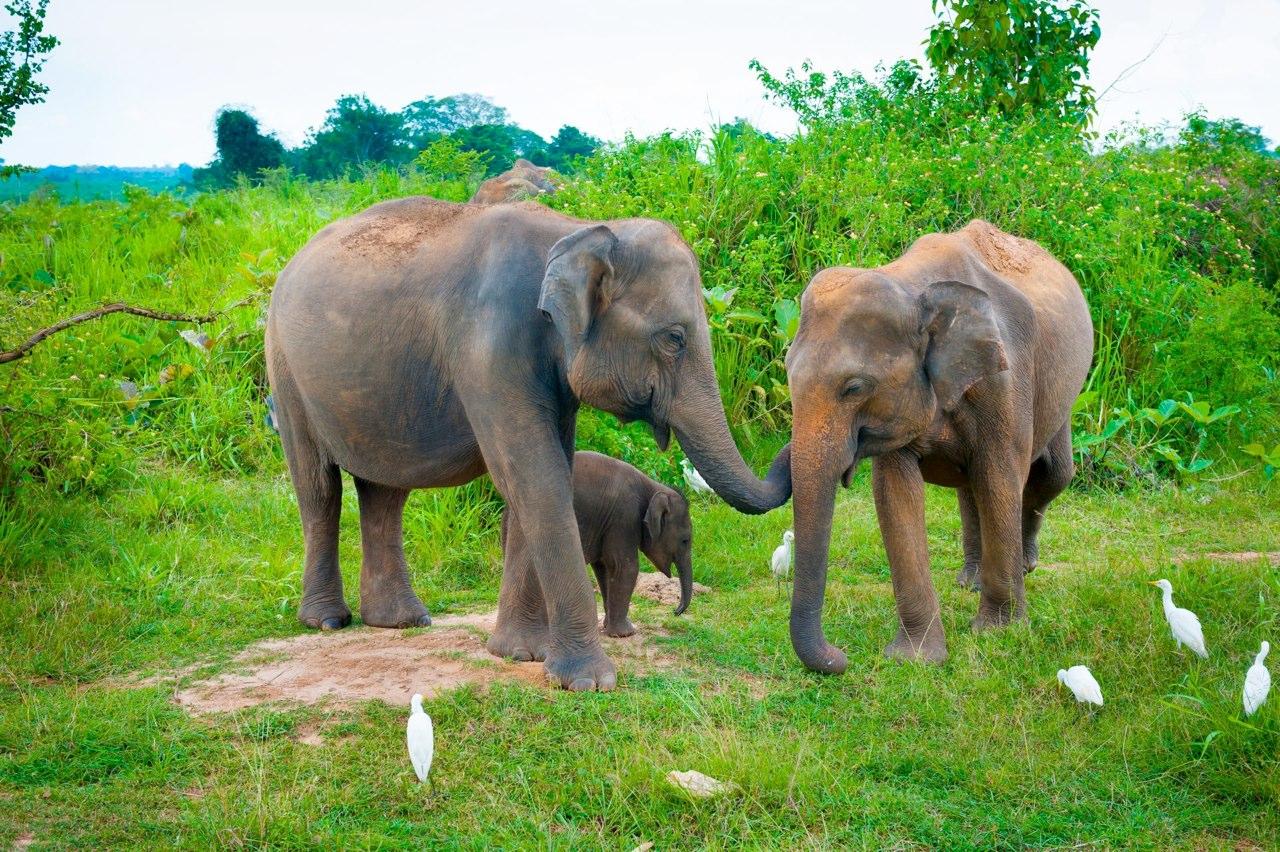 elephants (16).jpg