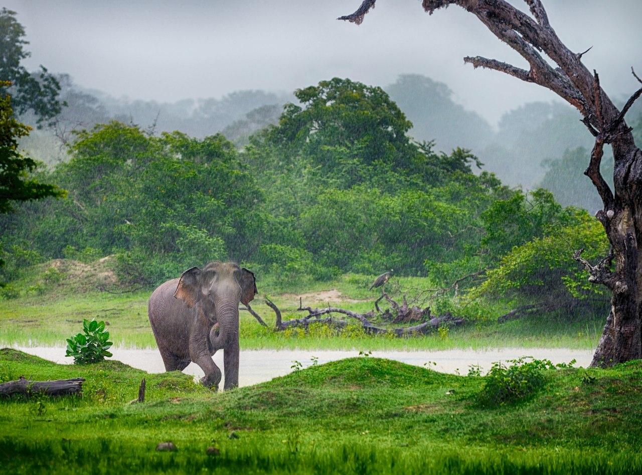 elephants (19).jpg