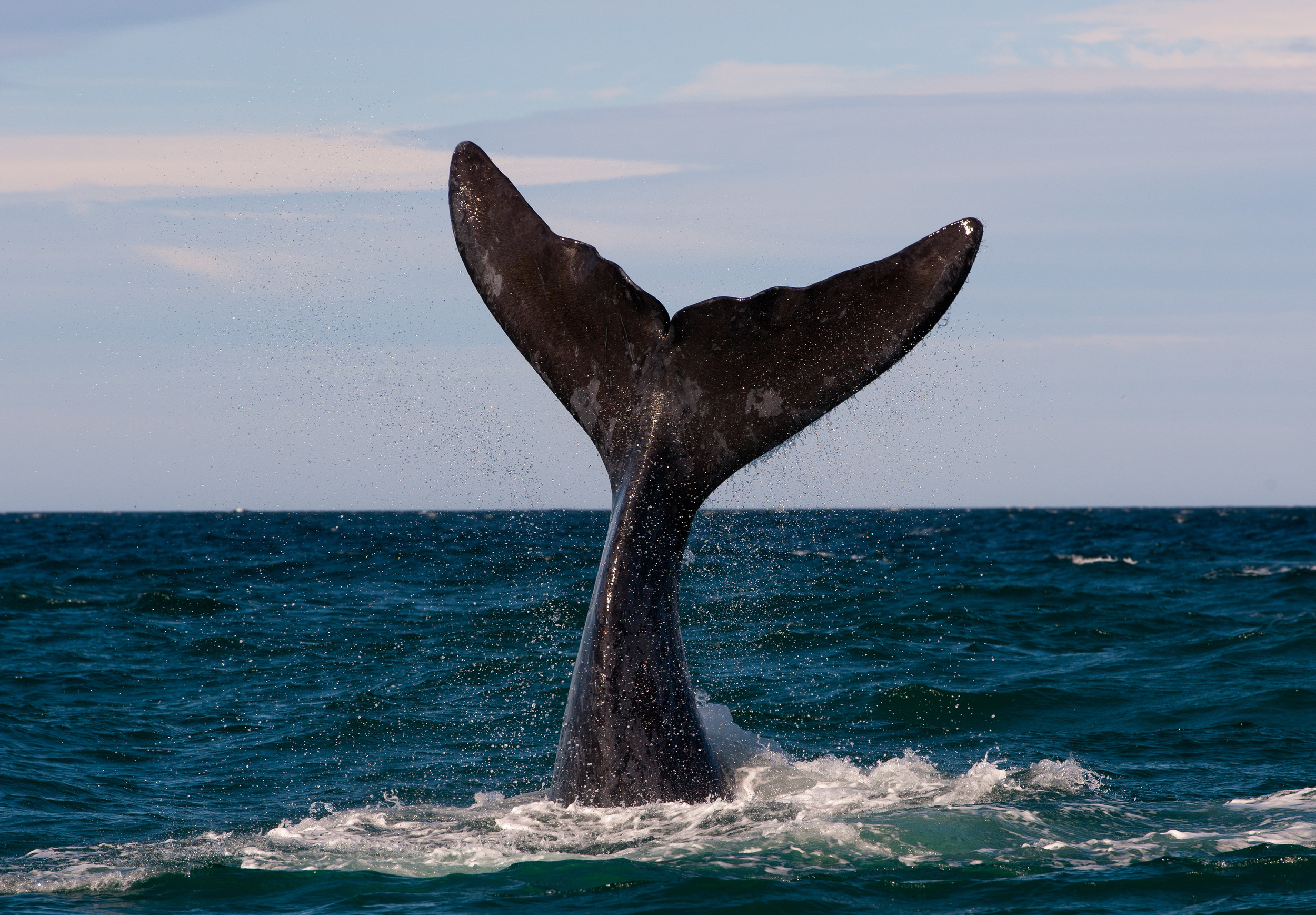 See blue whales
