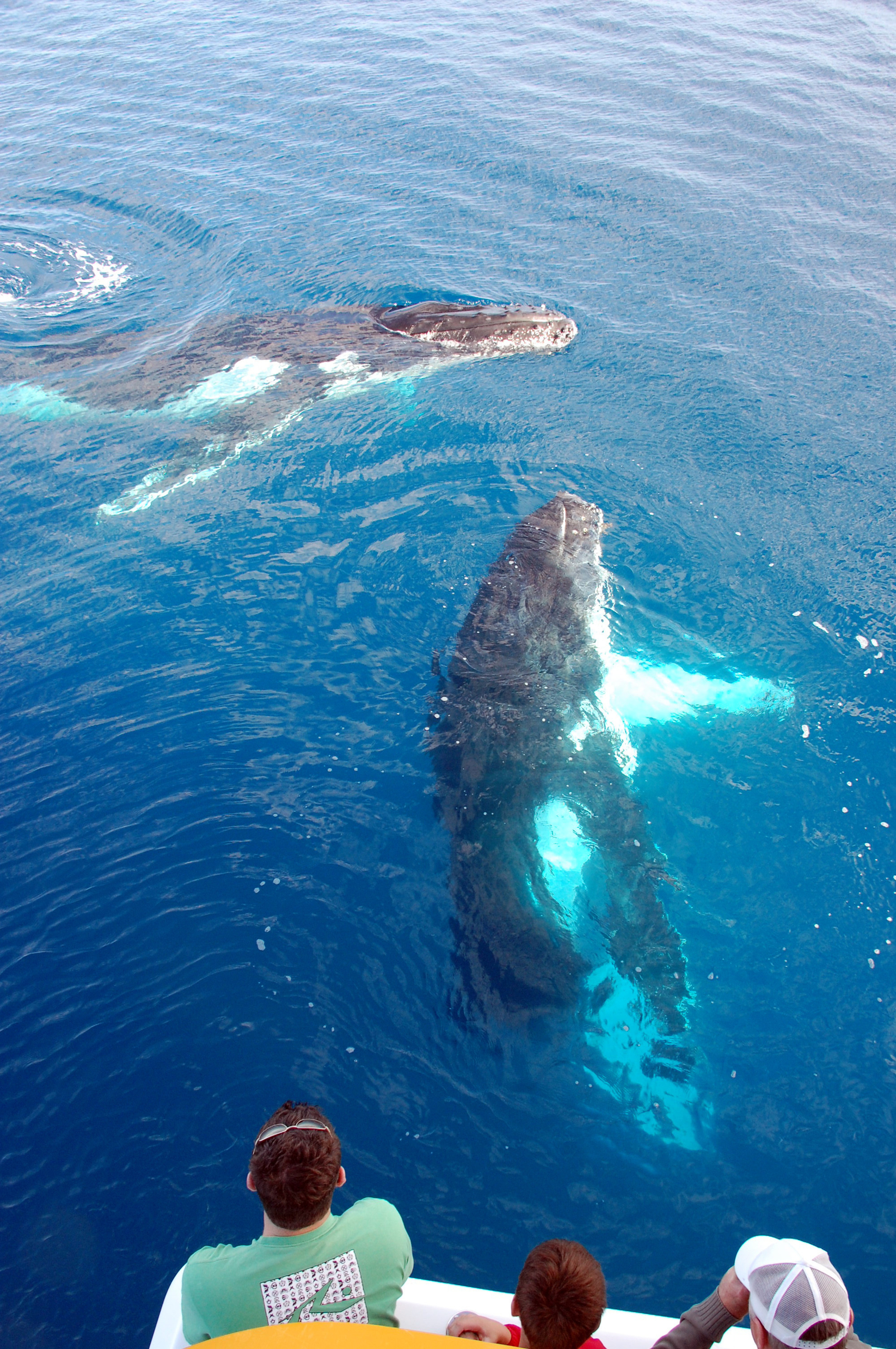 Whale watching boat safari