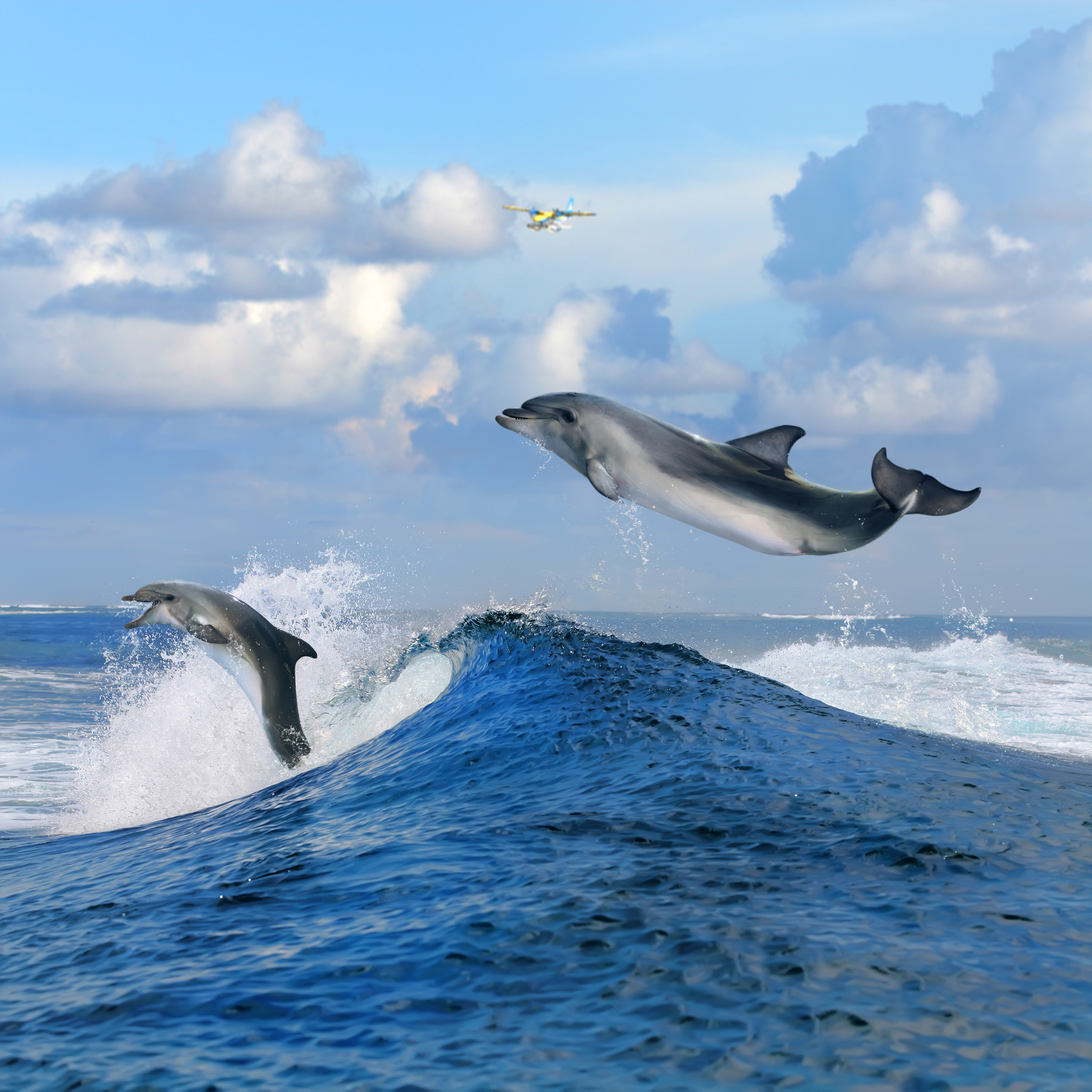 Spot dolphins in the Indian Ocean