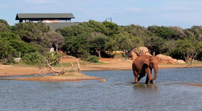Chaya-Wild-Yala-Kirinda-Sri-Lanka.jpg