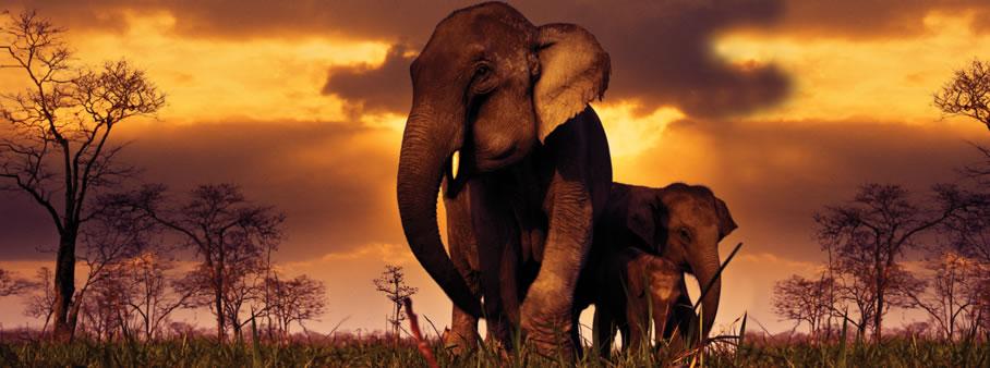 Chaya-wild-yala-sri-lanka-elephants.jpg