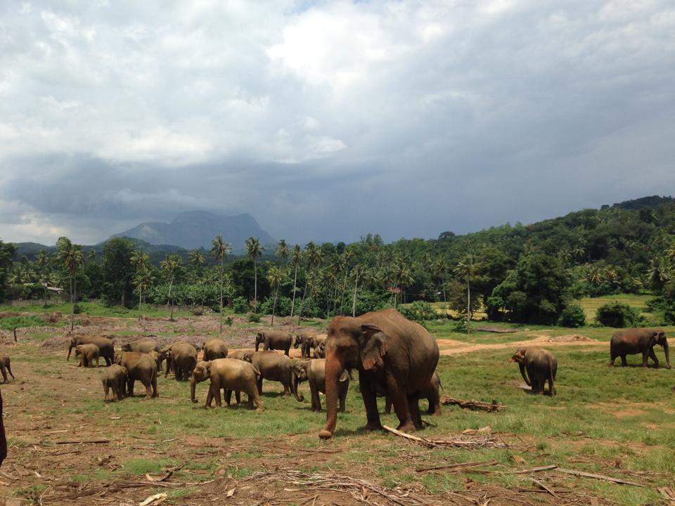 pinnawala-elephant-orphanage-sri-lanka-invite-to-paradise-honeymoon-couple-8.jpg