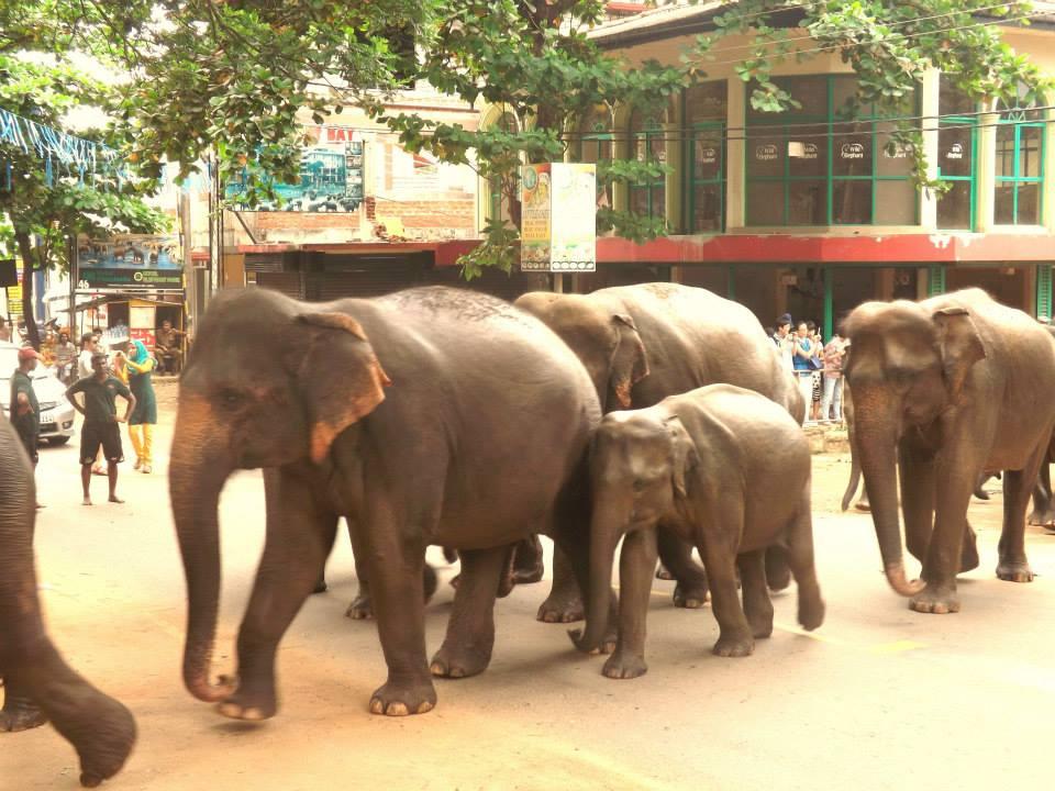 pinnawala-elephant-orphanage-sri-lanka-invite-to-paradise-honeymoon-couple-16.jpg