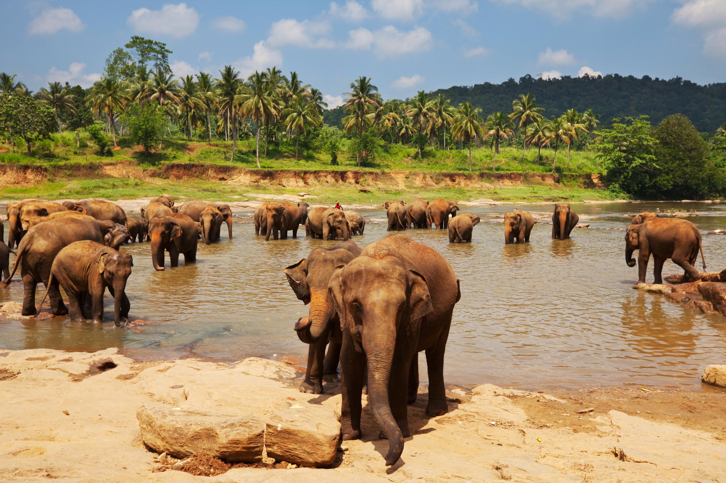 pinnawala-elephant-orphanage-sri-lanka-invite-to-paradise.jpg