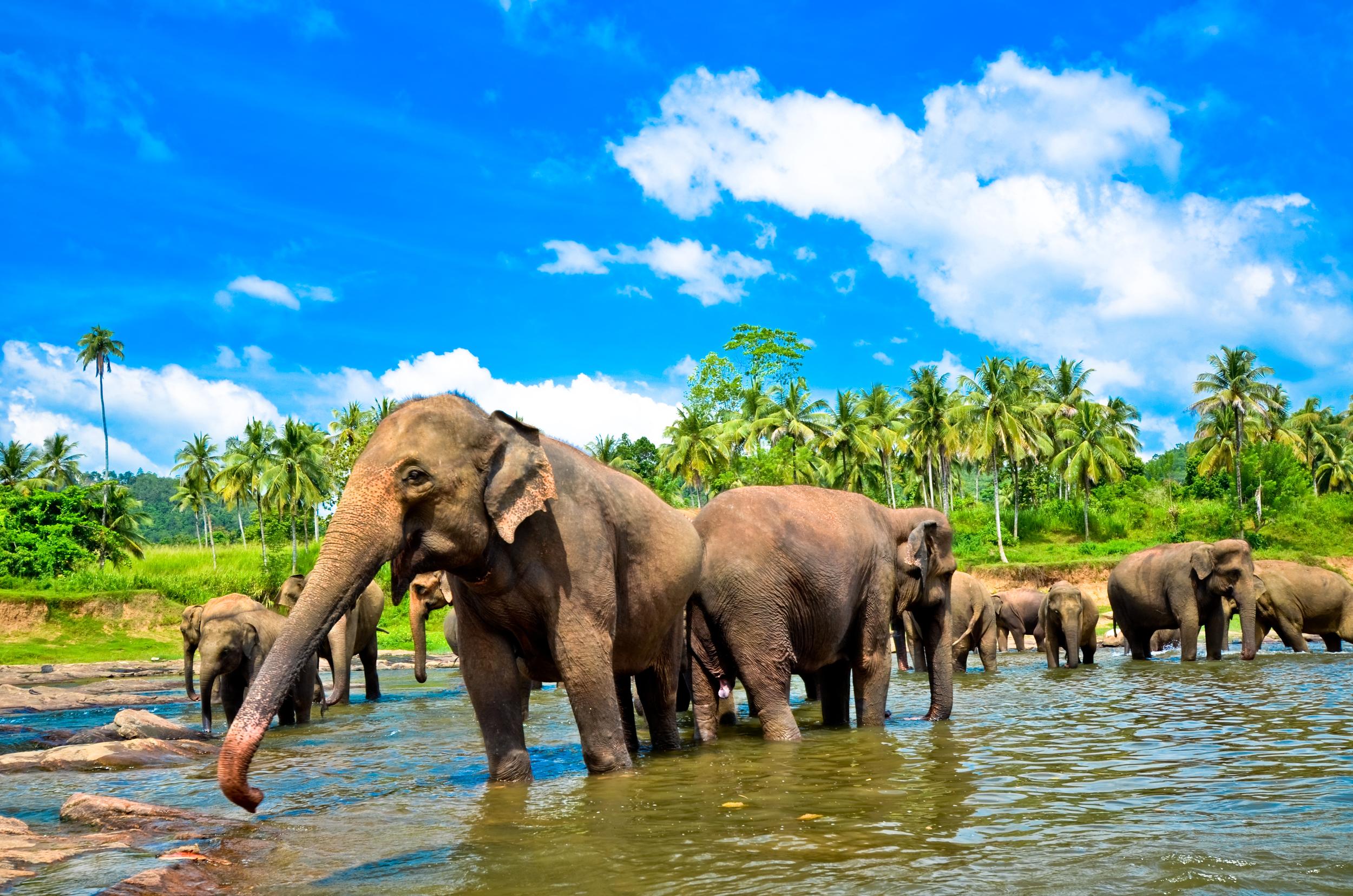 pinnawala-elephant-orphanage-sri-lanka-invite-to-paradise-river-3.jpg