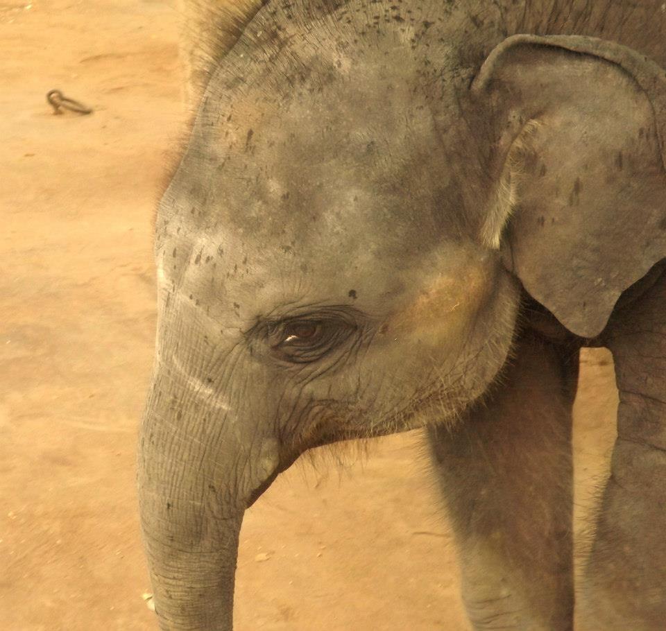 invite-to-paradise-customer-honeymoon-sri-lanka-baby-elephant.jpg
