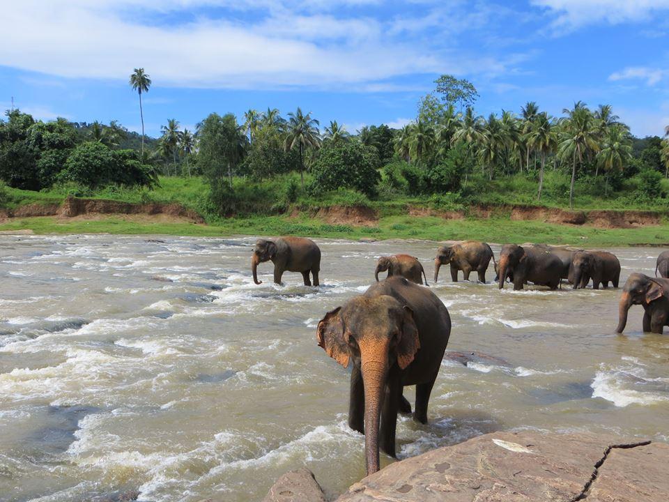 invite-to-paradise-holiday-honeymoon-sri-lanka-couple-october-31.jpg
