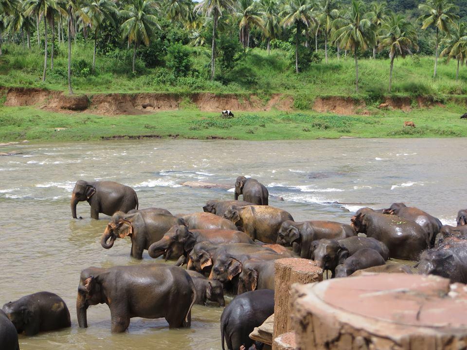 invite-to-paradise-holiday-honeymoon-sri-lanka-couple-october-32.jpg