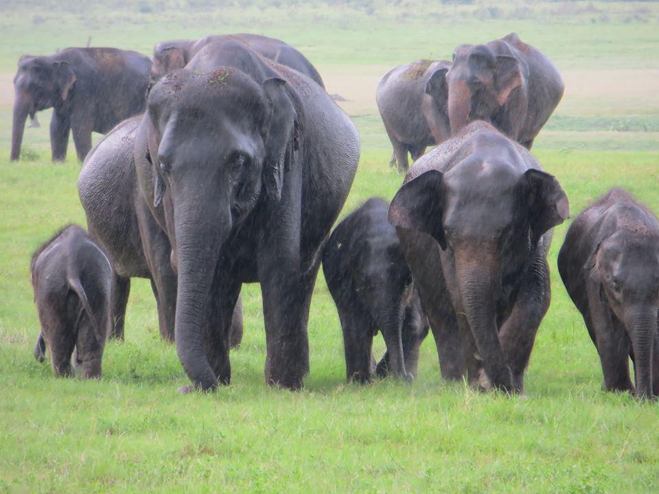 invite-to-paradise-holiday-honeymoon-sri-lanka-couple-october-80.jpg