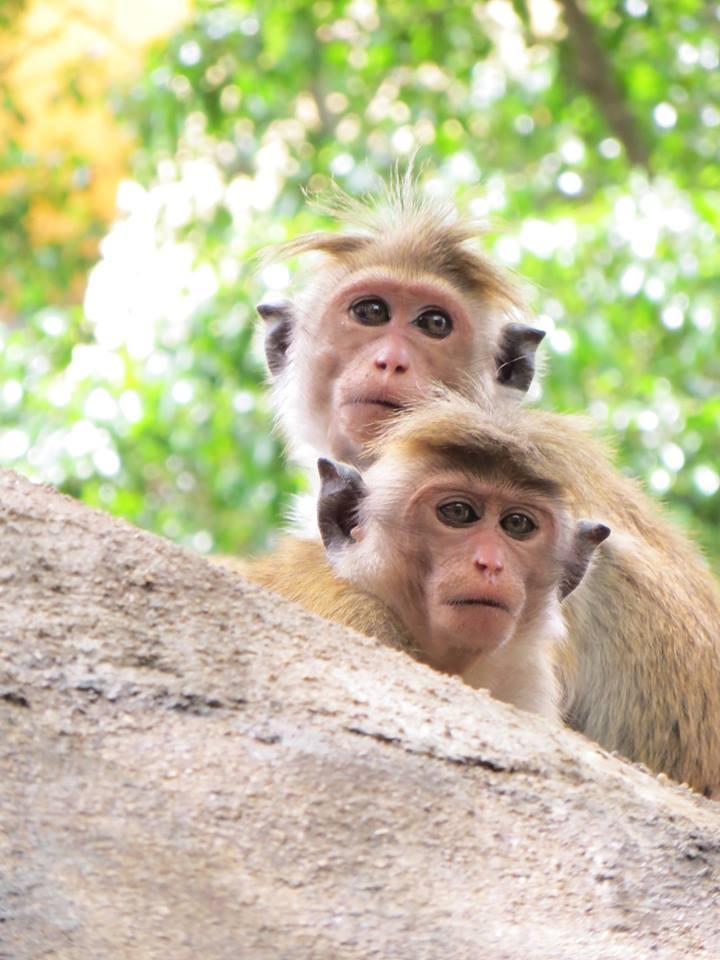invite-to-paradise-holiday-honeymoon-sri-lanka-couple-october-47.jpg