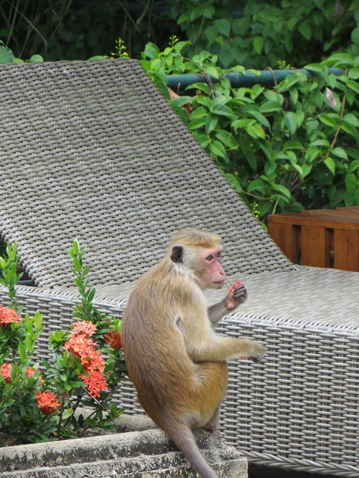 invite-to-paradise-holiday-honeymoon-sri-lanka-couple-october-88.jpg