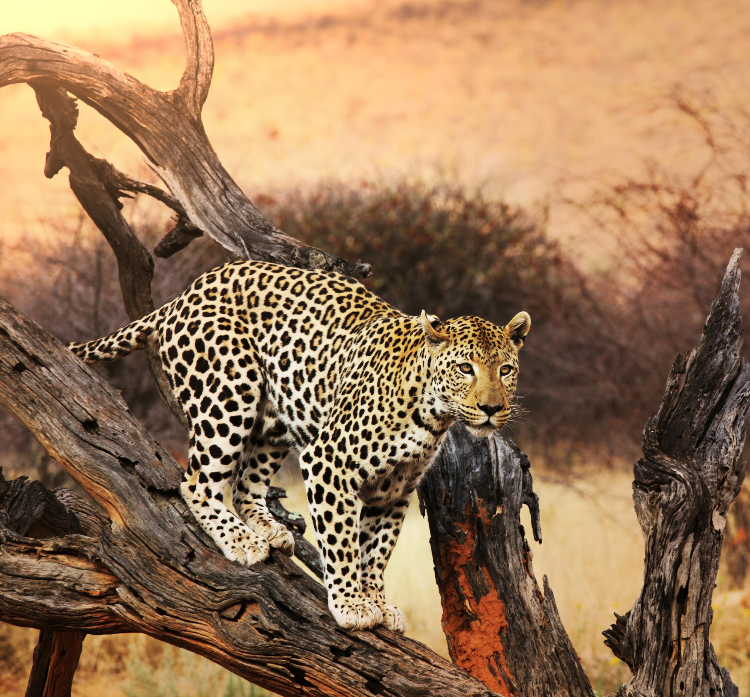 invite-to-paradise-sri-lanka-honeymoon-holiday-wildlife-leopard-safari-1.jpg
